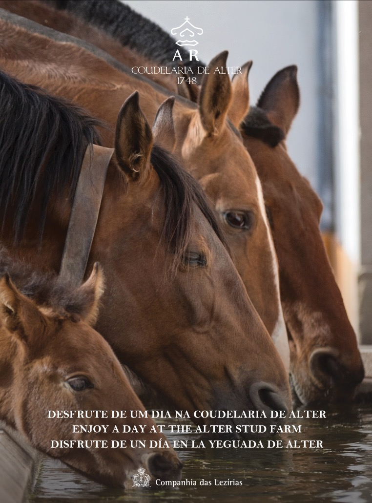 Enjoy a Day at the Alter Stud Farm
